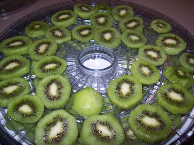 Dried Kiwis like really good gummy bears